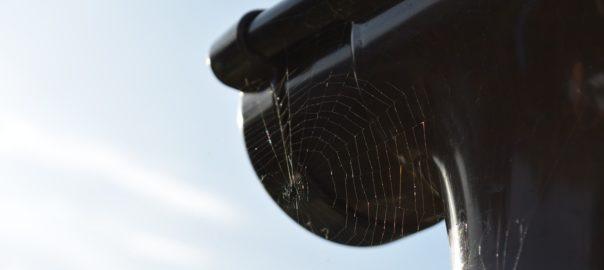 Tagrende hvor der hænger spindelvæv under